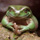 @Mutantfrog (twitter) - Roy Berman