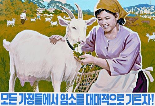 ess_north_korean_39 extensive goats